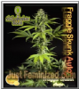 Philosopher Auto Fraggle Skunk Fem 5 Weed Seeds